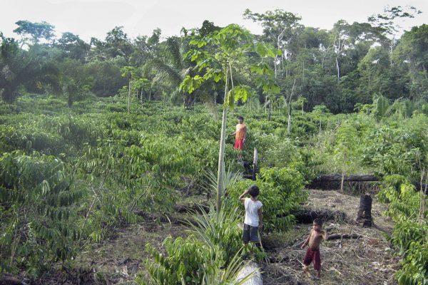 Valcemir Kanoé e filhos na plantação de café da família, Terra Indígena Rio Branco.Café premiado em 2019. Foto: Tanúzio Oliveira